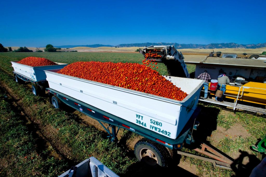 tomatoes on truck