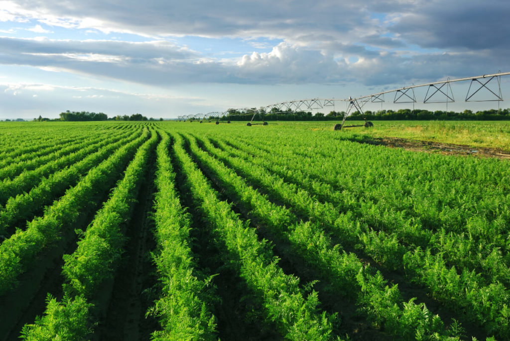 Long range view of lush green crop field with machinery in backround