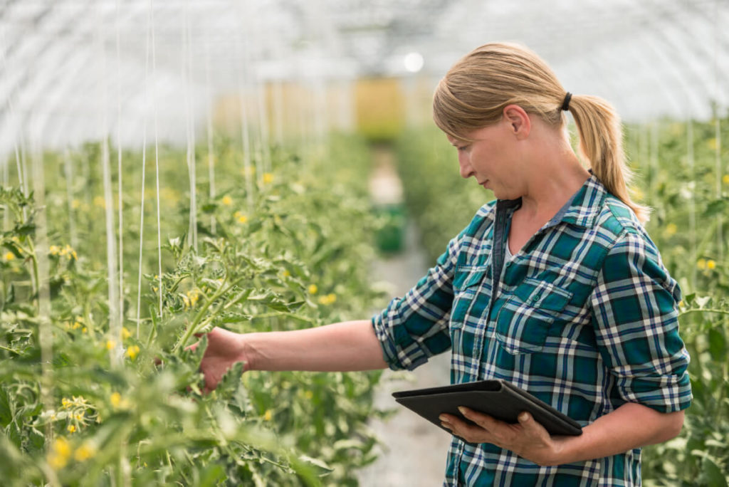 woman checking crop growth